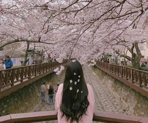 flowers, aesthetic, and japan image