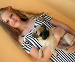 mops, pug, and cute image