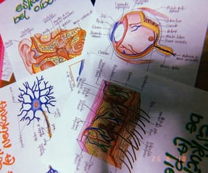 arte, dibujo, and medicine image