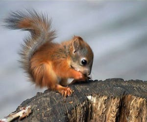 baby, cute, and squirrel image