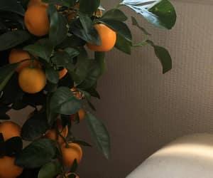 orange, fruit, and plants image