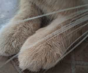 cat, paw, and cica image