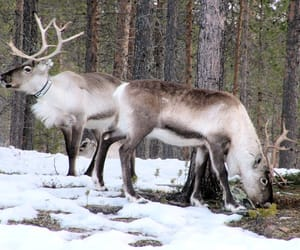 animals, europe, and finland image