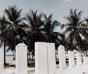 beach, palms, and sand image