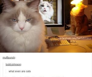 funny, cat, and tumblr image