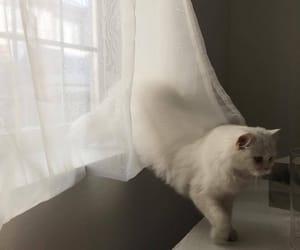 cat, animals, and white image
