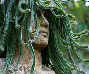 medusa and plants image