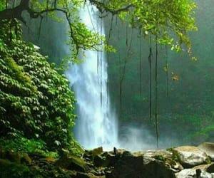 arbol, belleza, and naturaleza image