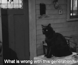 cat, quotes, and generation image