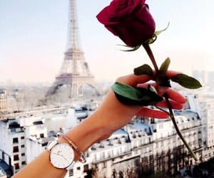 paris, rose, and flowers image