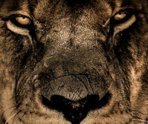 animal, aslan, and cool image