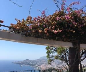 flowers, plant, and madeira island image