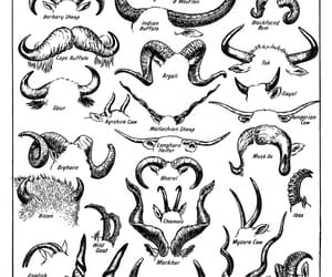 antlers, horns, and types image