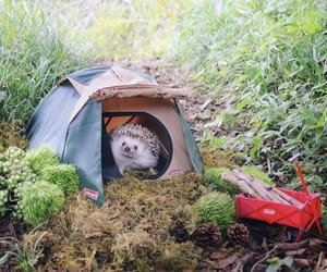 camping, hedgehog, and cute image