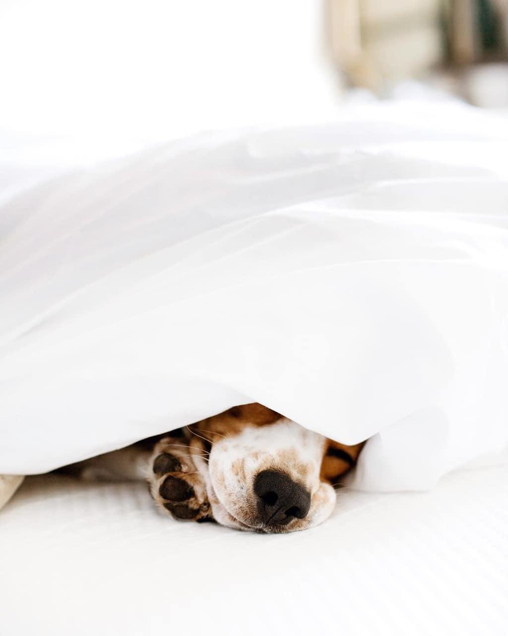 dog, animal, and cozy image