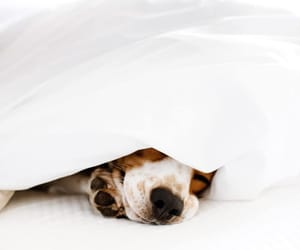 dog and cozy image