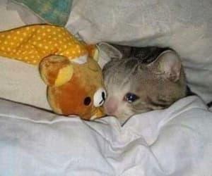 cat, meme, and sad image