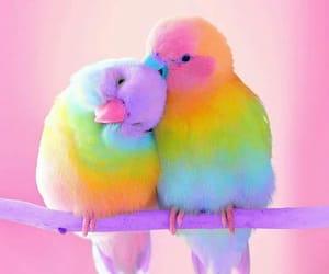 bird, animal, and rainbow image