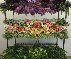 colors, florist, and flowers image