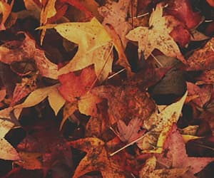 cold, fall, and leaves image