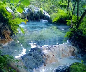 creek, nature, and forest image