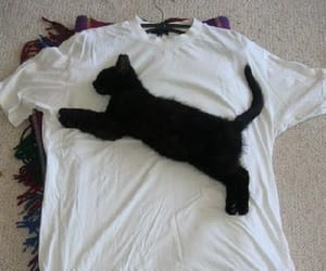funny cats and kittens image