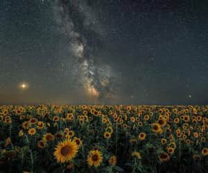 stars and sunflower image