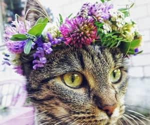 koty and kwiaty image