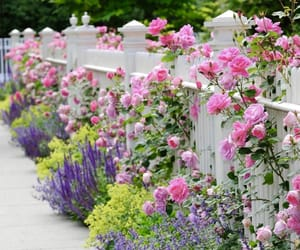 flowers, rose, and garden image