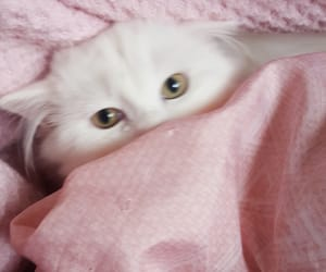 baby, white, and cat image