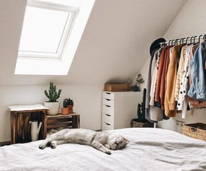 cat, bedroom, and white image