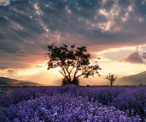 atardecer, belleza, and flores image