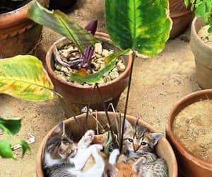 cats, flowers, and comment image