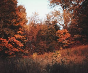 autumn, life, and nature image