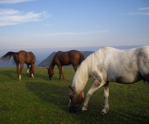 animals, horses, and italy image