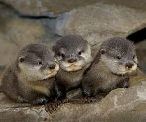 animals otters image