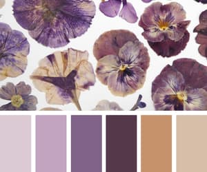 aesthetic, color, and flora image