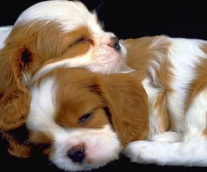 puppies image