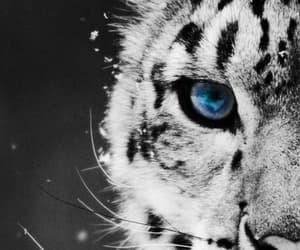 animal, black and white, and eye image