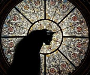 cat, black cat, and art image