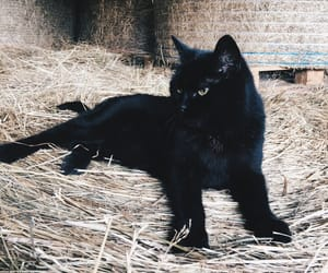 black, cat, and cuddly image