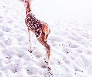bambi, animal, and pastel image