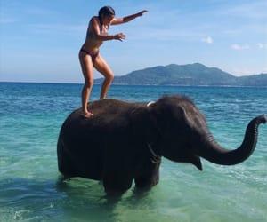 animals, beach, and elephant image