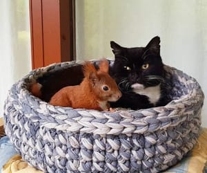 cat, squirrel, and friends image