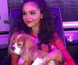 selena gomez and dog image