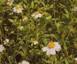 aesthetic, calm, and daisy image