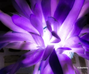 abstract, purple, and experimental photography image