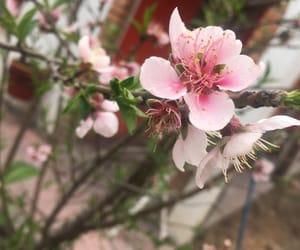flor, flower, and pink image