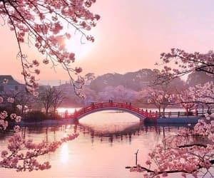 pink, bridge, and japan image