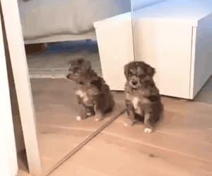 dog, happy, and mirror image